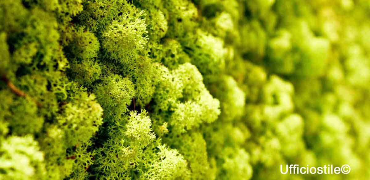 Pareti verde verticale lichene ufficiostile - Prato verticale per interni ...